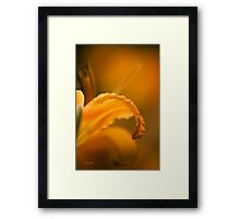 Luscious Orange Flower Art Framed Print