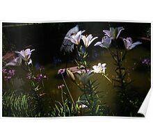 Middleton Plantation - Garden Delights Poster