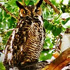 Whooo's There  by Janette  Kimbrough