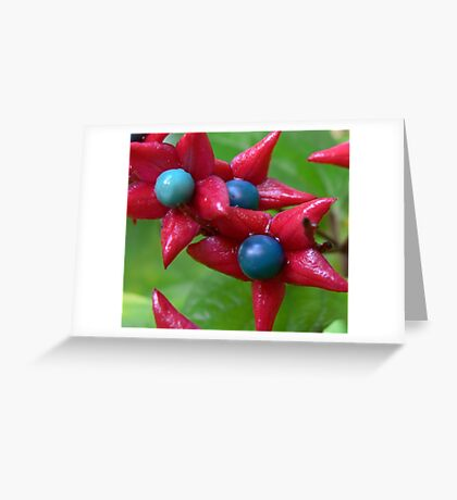 Prettiest seed pods ever Greeting Card