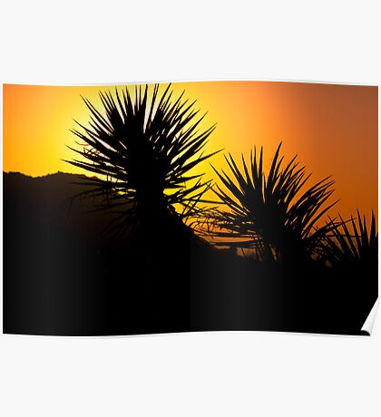 Yucca Sunset! Poster