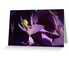 Yellow crab spider Greeting Card