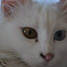 Turkish Van Cat Portrait by taiche
