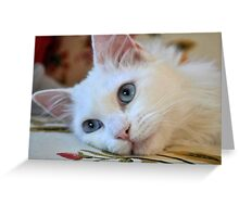 Portrait of A Blue Eyed Van Cat Greeting Card