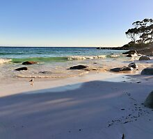 Morning Walk, Binalong Bay Tasmania Australia by bevanimage