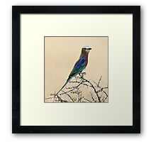 Lilac-breasted roller Framed Print