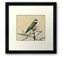 White-throated bee-eater checking out the Canon Framed Print