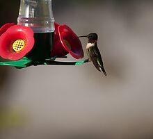 Ruby Throated Hummingbird by Richard Lee
