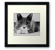 The actress..... Framed Print