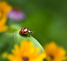 Lonely Ladybug Art by Christina Rollo