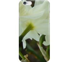 A collection of rising Daffodils iPhone Case/Skin