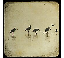 Spoonbills TTV Photographic Print