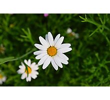 He loves me; he loves me not Photographic Print