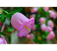 BellFlower Photographic Print
