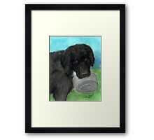 Hungry Newfoundland Dog Cathy Peek Animal Pets Framed Print