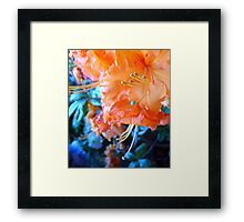 Turquoise Surprise... Framed Print