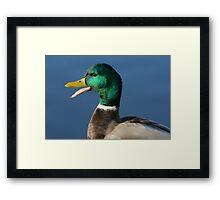 Portrait of Quacking Mallard Duck Framed Print