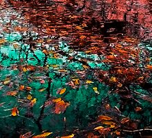 Leaves on Water by Tri-podd