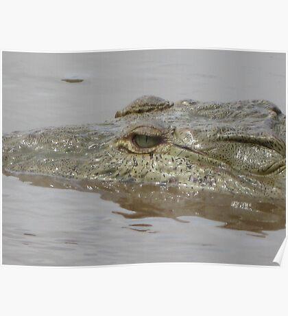 Crocodile in Rio Grande de Tarcoles, Costa Rica Poster