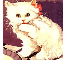 White Cat - Miss Priss Photographic Print