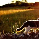 A Cat In The Sun by Mat Robinson