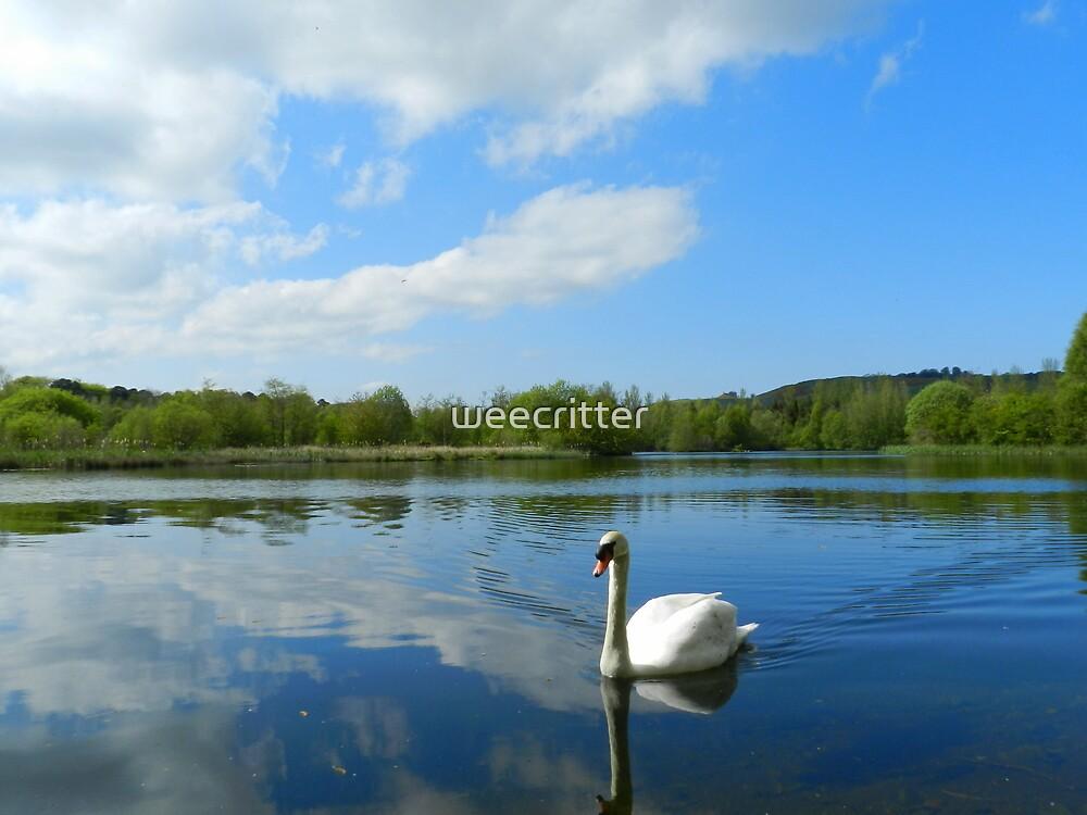 Peaceful easy feeling! by weecritter