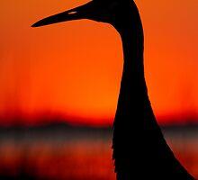 Sandhill Crane Silhouette. by Daniel Cadieux