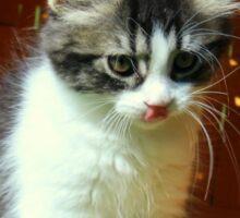 Kitten Licking Her Lips Sticker