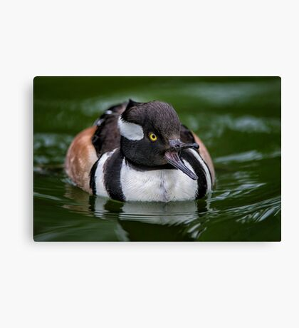Calling out Mrs Hoody Canvas Print