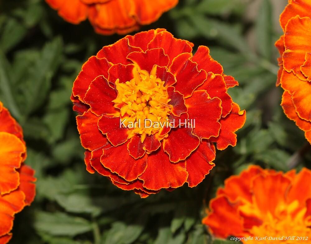 macro flora 025 by Karl David Hill