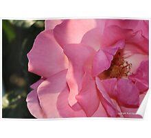 macro flora 027 Poster