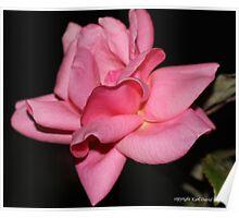 macro flora 029 Poster