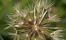 macro flora 031 by Karl David Hill