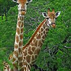 Who's who? by Explorations Africa Dan MacKenzie