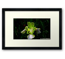 THE TOUCH OF THE FLOWER Framed Print