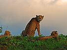 On Guard by Explorations Africa Dan MacKenzie