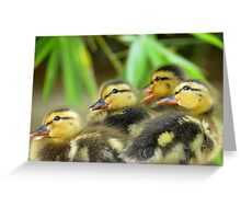 Duckling Quack-tette  Greeting Card