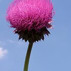 Sky Thistle by Ron Russell