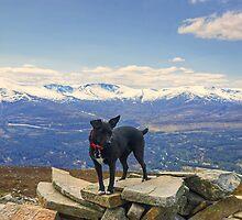Greetings From Scotland by VoluntaryRanger