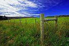 Tasmanian Peace by Michael  Moss