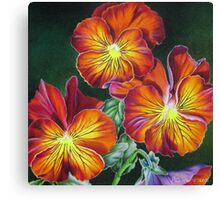 Pansies in Sunset Colors Canvas Print