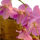 Orchids by Karen Stackpole