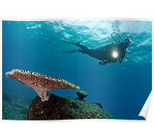 Scuba Diver shining torch by Table Coral Poster