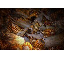 muddle of maize Photographic Print