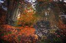 Fallen Tree by Nigel Bangert