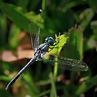 Blue Dragonfly by Sea-Change
