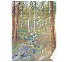 Woodland Stream, Peak District, Derbyshire Poster