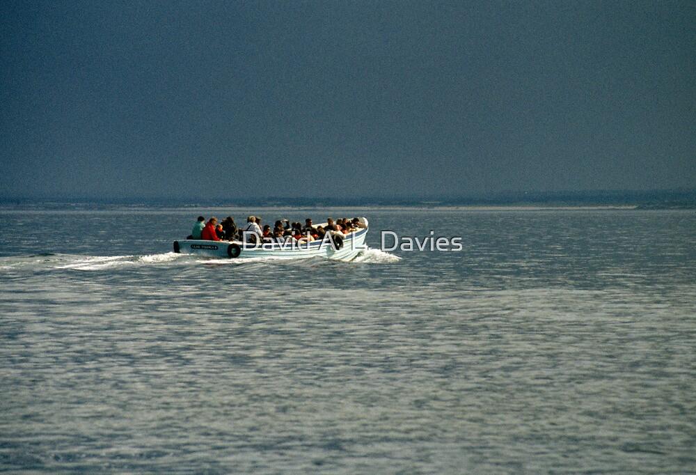 Farne Island boat trip, UK, 1980's. by David A. L. Davies