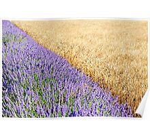 Lavender and wheat fields Poster