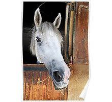Horse by its stable window Poster